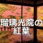京都 紅葉の撮影スポット 瑠璃光院
