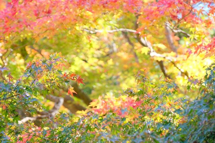 天授庵の紅葉の見頃と混雑
