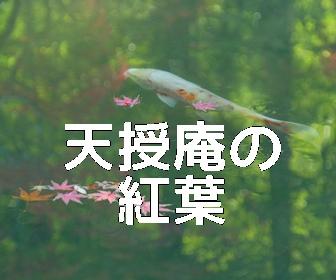 京都・紅葉の撮影スポット 天授庵