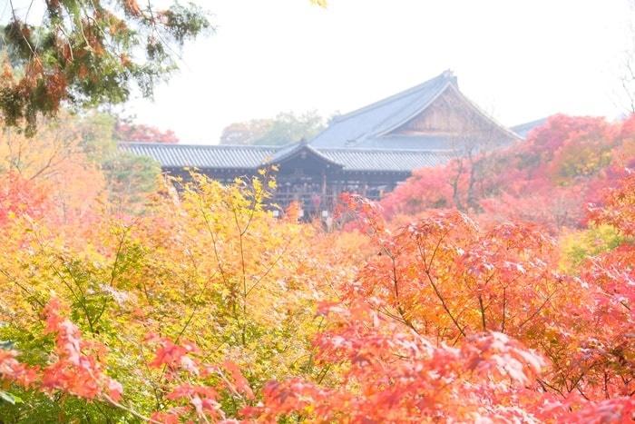フォトジェニックな東福寺の紅葉撮影スポット 臥雲橋からの眺め