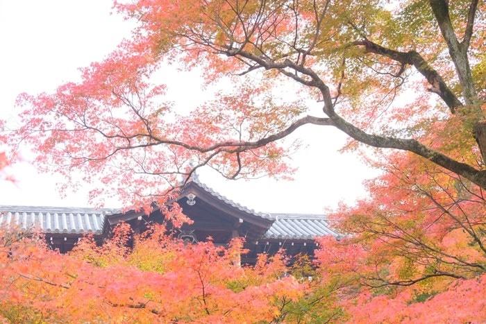 京都 紅葉の撮影スポット 東福寺