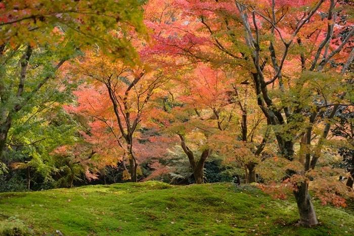 フォトジェニックな東福寺の紅葉撮影スポット
