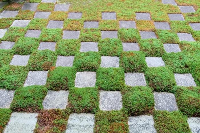 東福寺 フォトジェニックな苔の撮影スポット