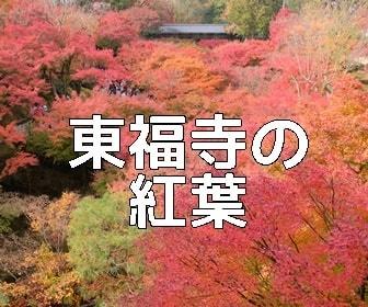 京都・紅葉の撮影スポット 東福寺