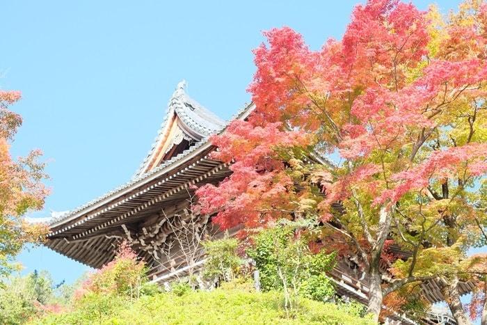 京都・紅葉の撮影スポット 善峯寺