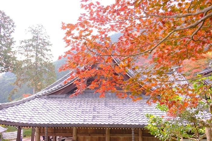 フォトジェニックな善峯寺の紅葉撮影スポット