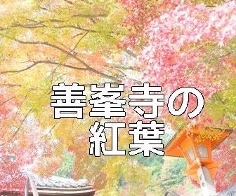 京都・青もみじの撮影スポット善峯寺