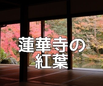 京都・紅葉の撮影スポット蓮華寺