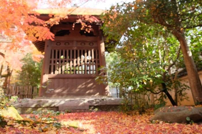 蓮華寺のフォトジェニックな紅葉撮影スポット