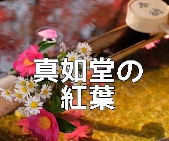 京都・紅葉の撮影スポット真如堂