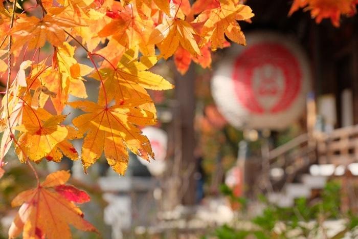 フォトジェニックな楊谷寺の紅葉撮影スポット