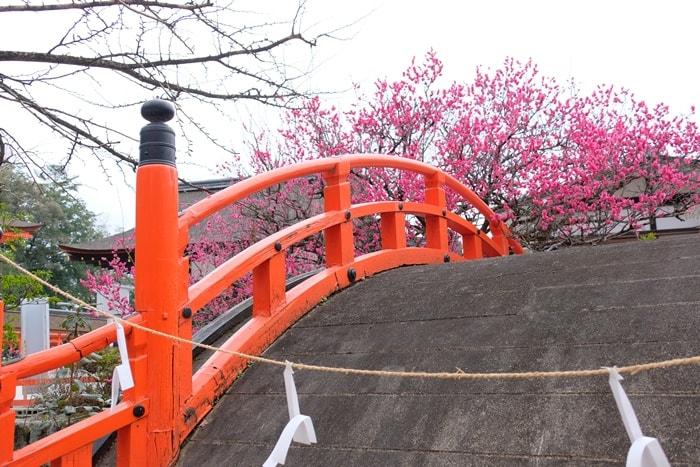 光琳の梅と反橋 画像