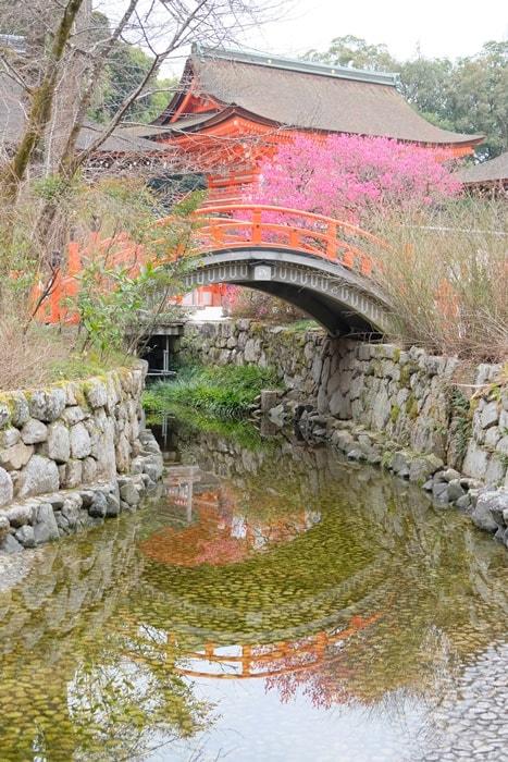 御手洗川に映る光琳の梅 画像