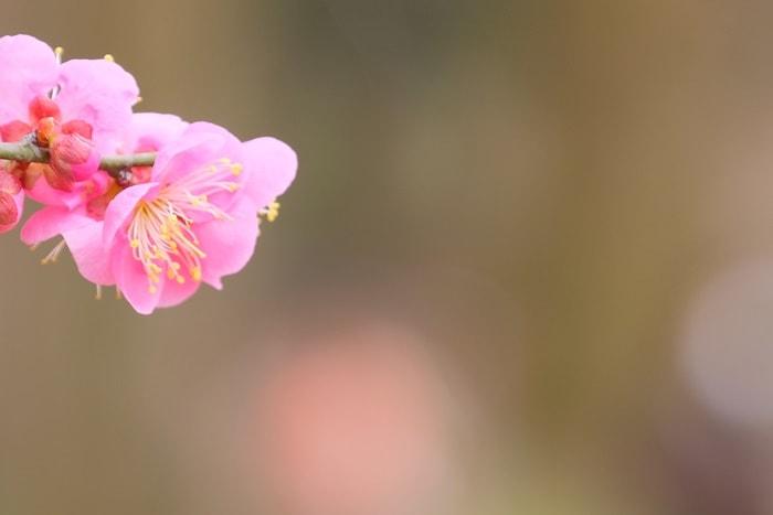 京都府立植物園 梅 道しるべ