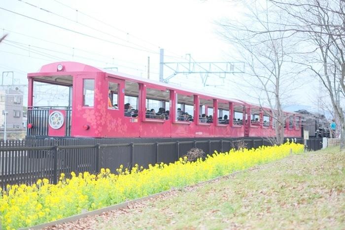 フォトジェニックな梅小路の菜の花と上記機関車 撮影スポット
