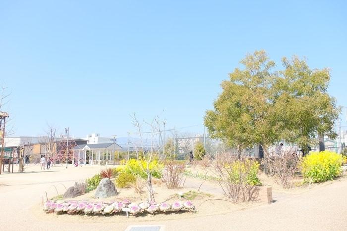 梅小路公園 菜の花の撮影スポット すざくゆめ広場