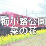 京都菜の花の撮影スポット 梅小路公園