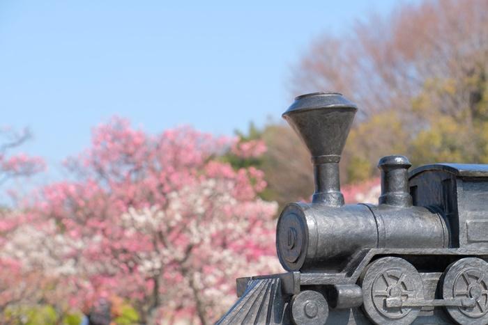 梅小路公園の汽車のオブジェと梅 画像