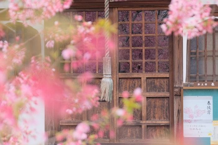 長徳寺 お堂のガラスに映り込んだオカメ桜