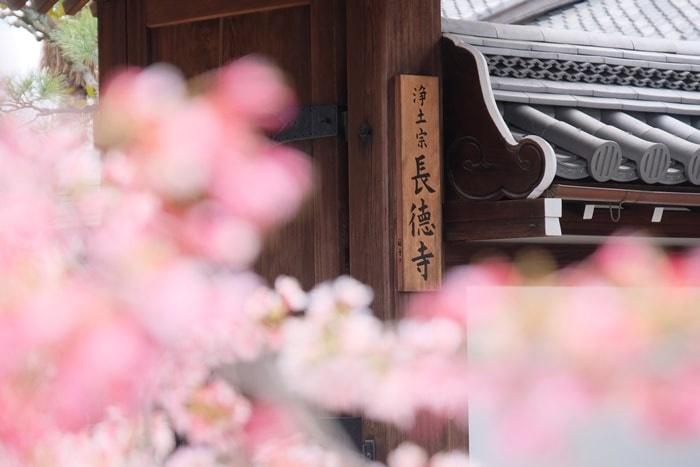 オカメ桜と長徳寺の入り口