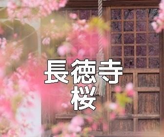 京都・桜の撮影スポット・長徳寺