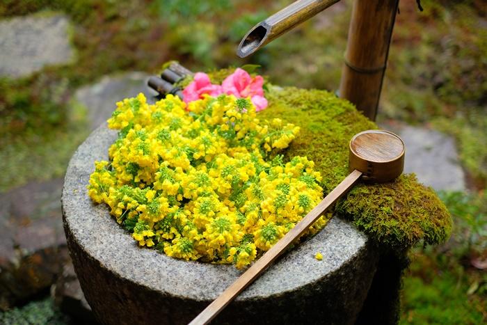 楊谷寺 菜の花の花手水 画像