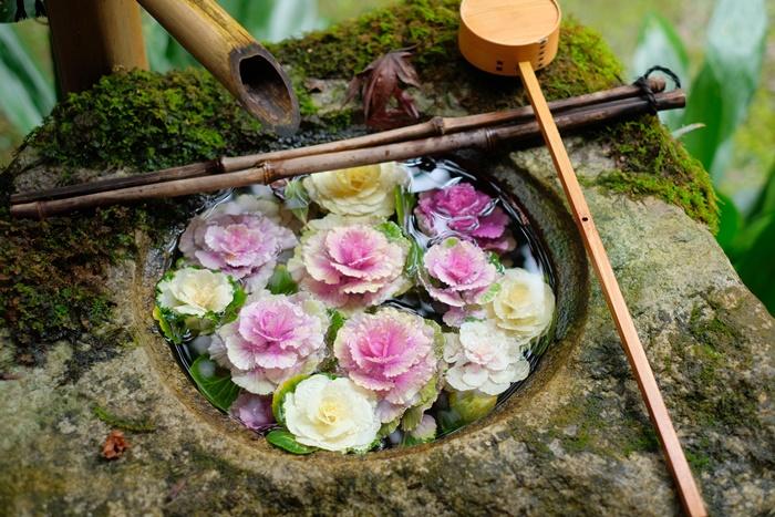 楊谷寺 花手水 葉牡丹 画像