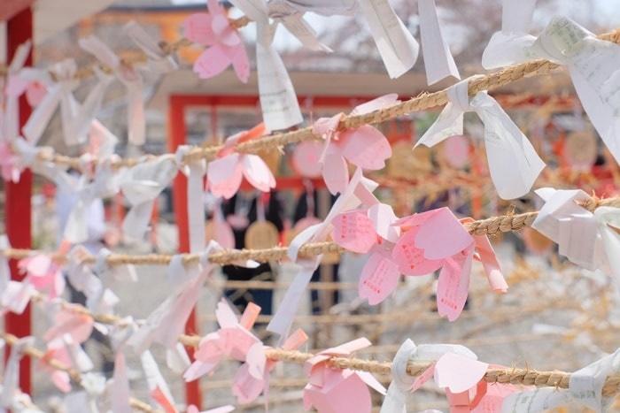 平野神社の桜の撮影スポット 桜みくじ