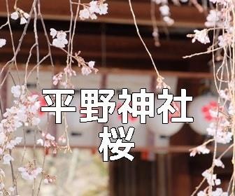 京都・桜の撮影スポット・平野神社