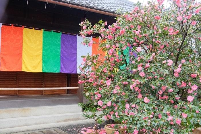 地蔵院(椿寺)の五色幕と椿の撮影スポット