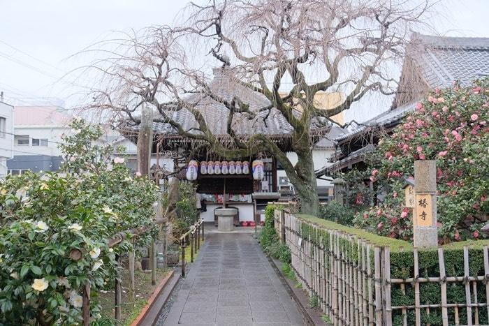 京都椿の撮影スポット 地蔵院(椿寺)