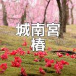 京都 椿の撮影スポット 城南宮