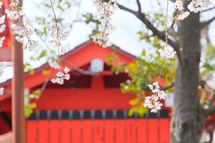 車折神社の桜の見頃