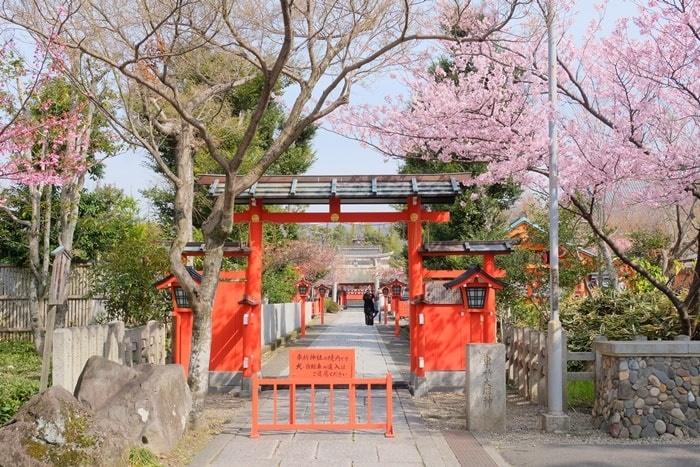 車折神社第3鳥居の前の桜