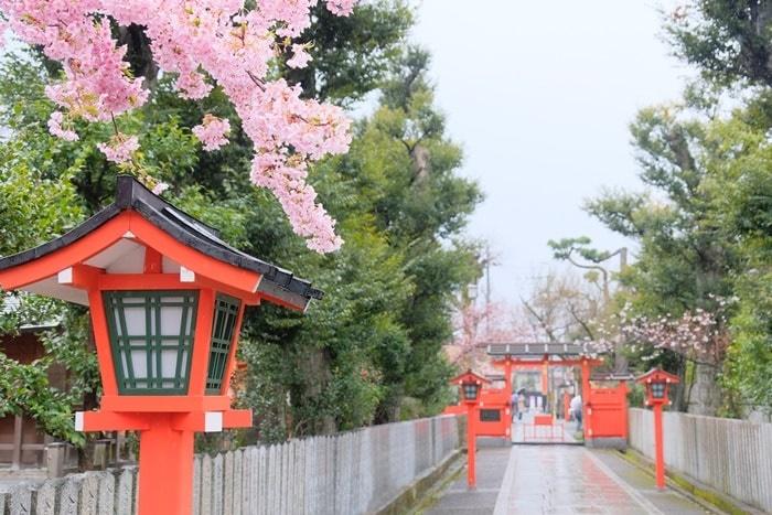 車折神社 東鳥居の河津桜