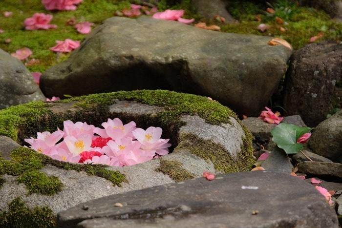 霊鑑寺の花手水