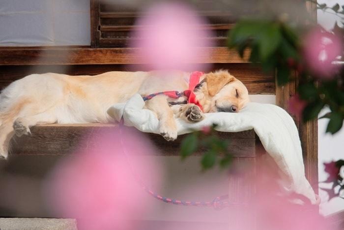 霊鑑寺の犬 撮影スポット