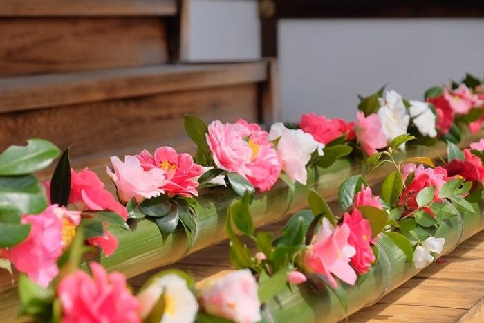 京都 椿の撮影スポット 霊鑑寺