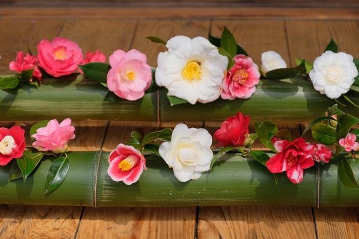 霊鑑寺の椿 撮影スポット 竹に生けられた椿 画像