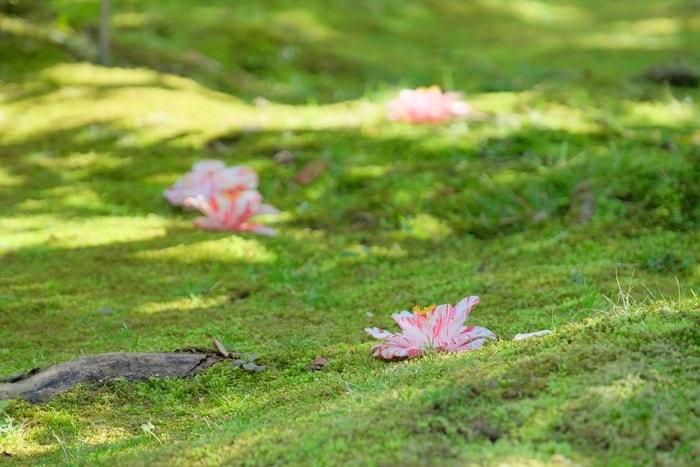 松花堂落ち椿 絵日傘