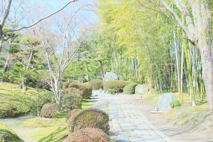 松花堂の庭園 竹林