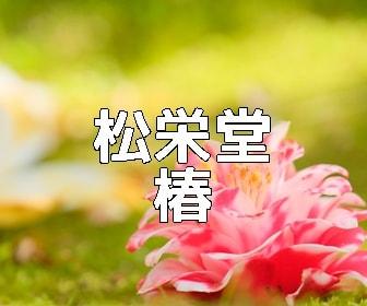 京都・椿の撮影スポット 松花堂の椿