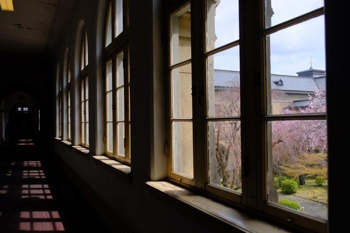 京都府庁の窓ごしの桜 撮影スポット