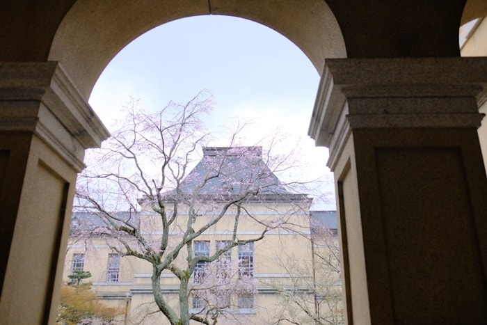 京都府庁のアーチごしの桜 撮影スポット