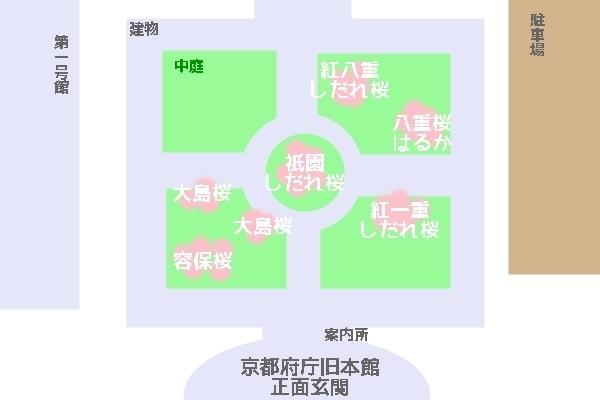 京都府庁の桜撮影スポットマップ