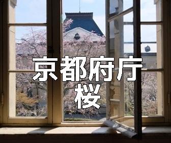 京都・桜の撮影スポット 京都府庁旧本館