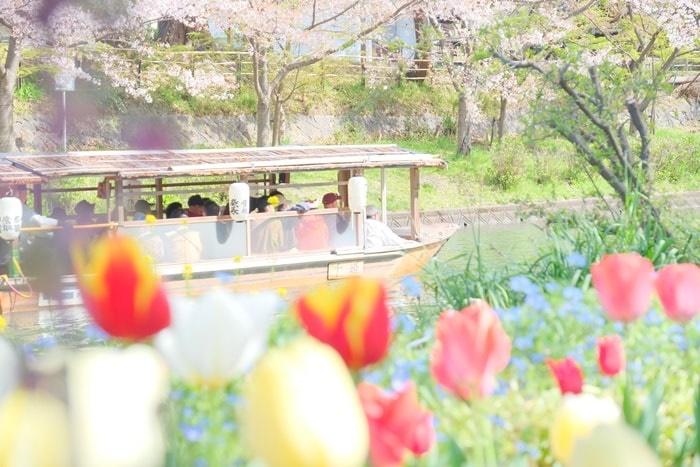 桜とチューリップと十石舟