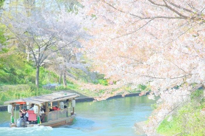伏見十石舟周辺の桜スポット 伏見港公園