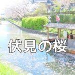 京都の桜撮影スポット 伏見十石舟