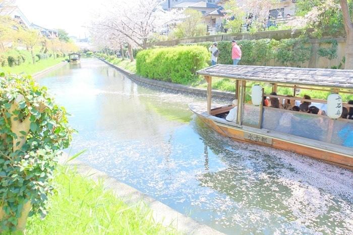 伏見十石舟周辺の桜撮影スポット1:十石舟花筏